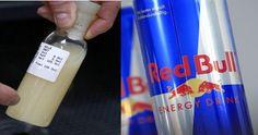 Você sabia que bebidas energéticas contêm ingredientes extraídos da urina e sêmen do Touro? Um estudo feito pela Longhorn Cattle Company, testou algumas das principais marcas de bebidas energéticas, como Red Bull, monster e etc.