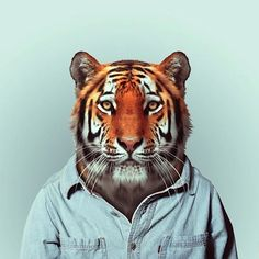 zoo_portraits_by_yago_partal_05