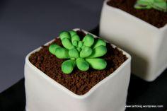 succulent tut 2