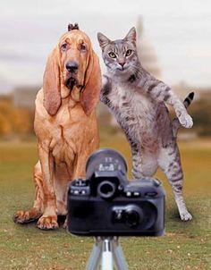 The ever ongoing battle between cats and dogs. It just won't stop being funny! #Funny #Pet @PetPremium Pet Insurance