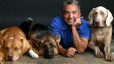 Cesar Millan --- I used to love watching the Dog Whisperer. Haven't seen it on TV for a long time!