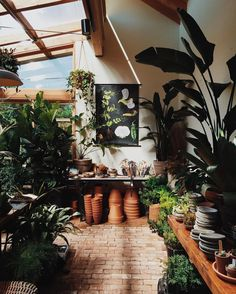 Amazing Shed Plans - Greenery - Now You Can Build ANY Shed In A Weekend Even If You've Zero Woodworking Experience! Start building amazing sheds the easier way with a collection of shed plans! Green Day, Garden Shop, Home And Garden, Ficus, Home And Deco, Shed Plans, Houseplants, Bonsai, Indoor Plants