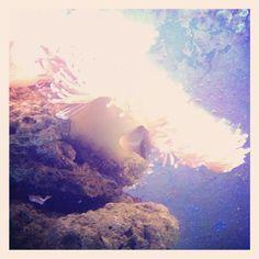 Melbourne aquarium 4