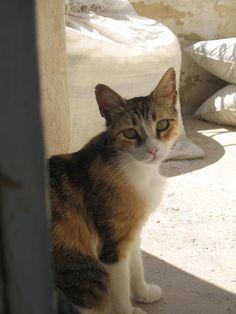 [cats+of+greece+07+rodada3.JPG]