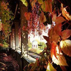 Überall stehen die Häuser leer. Der Weinberg im Herbst. Mansions, Satire, Places, Painting, Photos, Kassel, Old Abandoned Houses, Vineyard, Fall