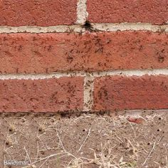 Destroy Exterior Ant Nests - If you frequently see ants in the same area on the…