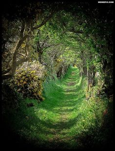 Tree Tunnel - Ballynoe, County Down, Northern Ireland. I would love to visit places of my Irish roots.