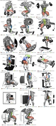 Perna ( quadríceps, bíceps femural, adutor e abdutor) www.weightlossjum...http://www.weightlossjumpsstar.com/exercise-affect-metabolic-rate/