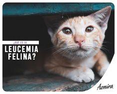 signos de remisión de diabetes felina de aborto involuntario