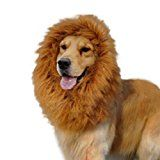 Futaba Dog Lion Mane Wig Costume -Small Puppyby Futaba1816% Sales Rank in Pet Supplies: 196 (was 3757 yesterday)Buy: Rs. 899.00 Rs. 545.00 (Visit the Movers & Shakers in Pet Supplies list for authoritative information on this product's current rank.)