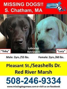 Samantha Watson‎New England Lost and Found Pets Follow · 11 mins ·     Please share