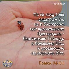 Christian Quotes, Bible Verses, Religion, Business, Life, Faith, Scripture Verses, Store, Bible Scriptures