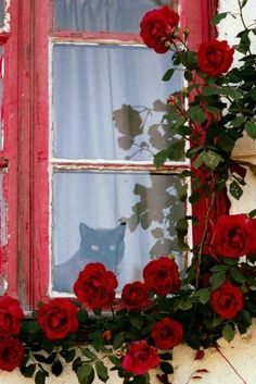 Oh my goodness, this pic of black cat in window with red roses would make an awesome painting! Cat Window, Window View, Red Cottage, Looking Out The Window, Through The Window, Foto Art, Red Aesthetic, Cool Paintings, I Love Cats