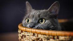 gato, preto, cesta