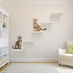modern-cat-wall-shelves-in-living-room - Amy Allen - modern-cat-wall-shelves-in-living-room modern-cat-room-decor-ideas - Cat Climbing Wall, Cat Climbing Shelves, Benny And Joon, Cat Wall Shelves, Shelves For Cats, Animal Gato, Cat Plants, Cat Perch, Cat Hacks