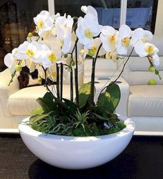 Large White Orchid Arrangement, Realistic Orchids Set In White Vase, Green Moss and Succulent Accents, White Orchids, Orchid Silk Floral Arr Indoor Orchids, Artificial Orchids, Indoor Flowers, Indoor Plants, Orchid Flower Arrangements, Orchid Centerpieces, Flower Vases, Succulent Arrangements, Silk Orchids