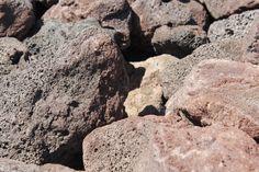 "Red Lava Rock 3""-8"""