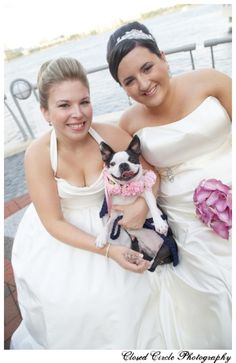 Boston terrier at a wedding.