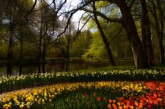 Morning sun at keukenhof - null