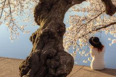 lady, woman, model, hat, cherry blossoms, sunrise, early morning, model, tidal basin, cherry blossoms, flower,