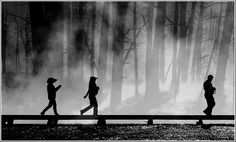 Wood walkers.