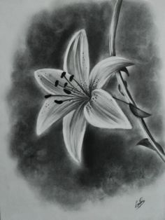 Realistic flower drawing tutorial and beautiful flower drawings and realistic color pencil drawings 3d Pencil Sketches, Pencil Drawings Of Flowers, Flower Sketches, Pencil Art Drawings, Drawing Sketches, Drawing Flowers, Drawing Ideas, Drawing Tips, Lilly Flower Drawing