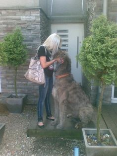 Irish Wolfhound! would lovvee to have one one day
