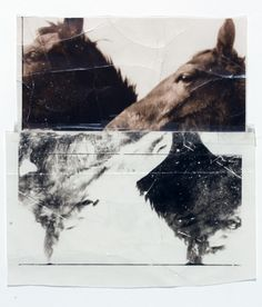 Doug & Mike Starn / The Horses, 1986-1993 / C-Prints and cellophane tape / From the collection of Gerald Mead.