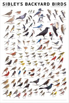 Printable Bird Identification Chart | February 16, 2012