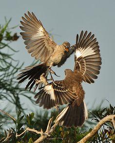 We fight now! Small Birds, Love Birds, Beautiful Birds, Animal Photography, Nature Photography, Eagle Pictures, Bird Perch, Birds Of Prey, Wild Birds