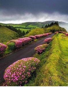 way through the forest reserve of pinhal da paz, sao miguel island, azores portugal by polopixel.com