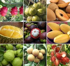 Exotic tropical fruit are rich in vitamins