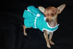 Mesmerizing Training Your Dog Proven, Useful Hints And Tips Ideas. Remarkable Training Your Dog Proven, Useful Hints And Tips Ideas. Chihuahua Clothes, Puppy Clothes, Dog Tutu, Dog School, Dog Clothes Patterns, Yorkie Puppy, Dog Pattern, Girl And Dog, Dog Dresses