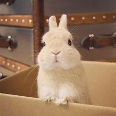 @maribowstagram の Instagram. Good job today❤️ #maribow #rabbit #bunny…」