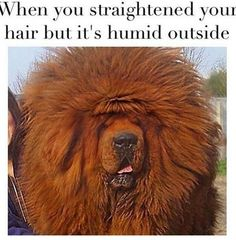 How much it hurts to ruin a good hair day by going outside. | 23 Photos People With Straight Hair Will Never Understand