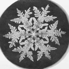 Wilson A. Bentley's photograph of a snowflake under the microsope.