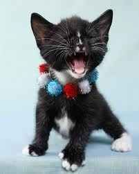 This kitten that's just screaming about how much it loves America.