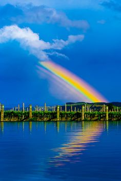 A rainbow reflected in an infinity pool with vineyards behind at the Elephant Hill Estate and Winery on the Te Awanga coast, near Napier, Ha...