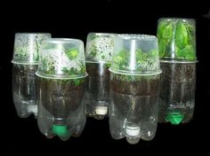 Recycled 2 liter soda / pop bottles make great seed starters / propagators simply by adding a deli container on top oz - on the left, 24 oz on the right). They're a perfect fit. Container Gardening, Gardening Tips, Organic Gardening, Hydroponic Gardening, Pop Bottles, Plastic Bottles, Recycled Bottles, Water Bottles, Bottle Candles
