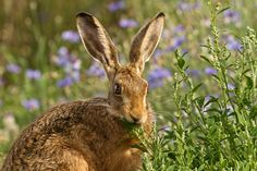 Wild Rabbit, March Hare, Bunny Rabbits, Yearly Calendar, Photographs, Photos, Planet Earth, Wildflowers, Wildlife Photography