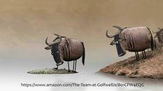Golfwell water buffalo video