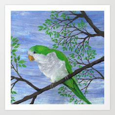 http://society6.com/product/a-painting-of-a-quaker-parrot_print?curator=wizzies