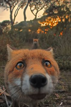 ** The fear is palatable in the fox's eyes until he's sure the human reflected there is carrying a camera, not a gun.He has see too many of his loved ones murdered for their coats or their very heads for trophies. A world gone mad with apathy and greed. Sad beyond comprehension.