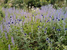 Piet Oudolf's Top 100 plants Love Garden, Easy Garden, Garden Ideas, Prairie Garden, Herbaceous Border, Famous Gardens, Planting Plan, Garden Design Plans, Garden Bulbs
