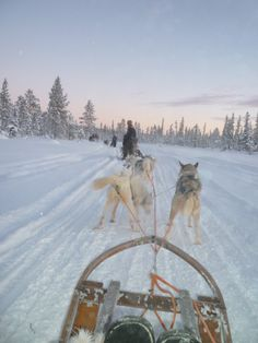 The Swedish Arctic, driving sled dogs.