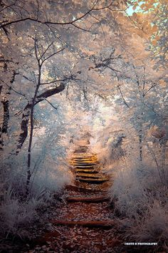 Fascinating-Photographs-of-Forest-Paths-to-another-world-19.jpg 600×903 pixels