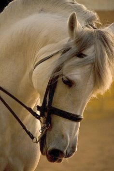 Gorgeous horse. - via interior canvas