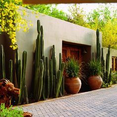 Large terracotta pots blend in nicely with cacti.