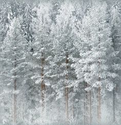 Winter Time, Finland.