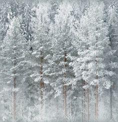 Winter Time, Finland | imagebyOlli Kekäläinen-http://www.flickr.com/photos/ok6/  P